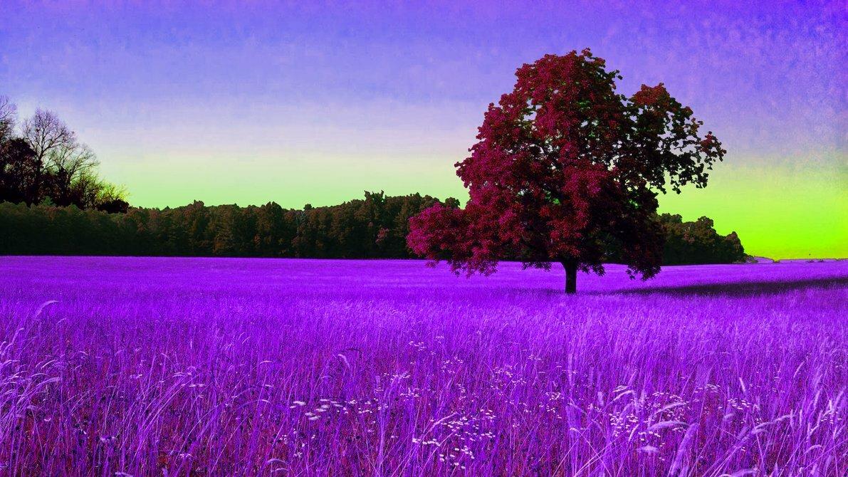 Картинки фиолетовый пейзаж