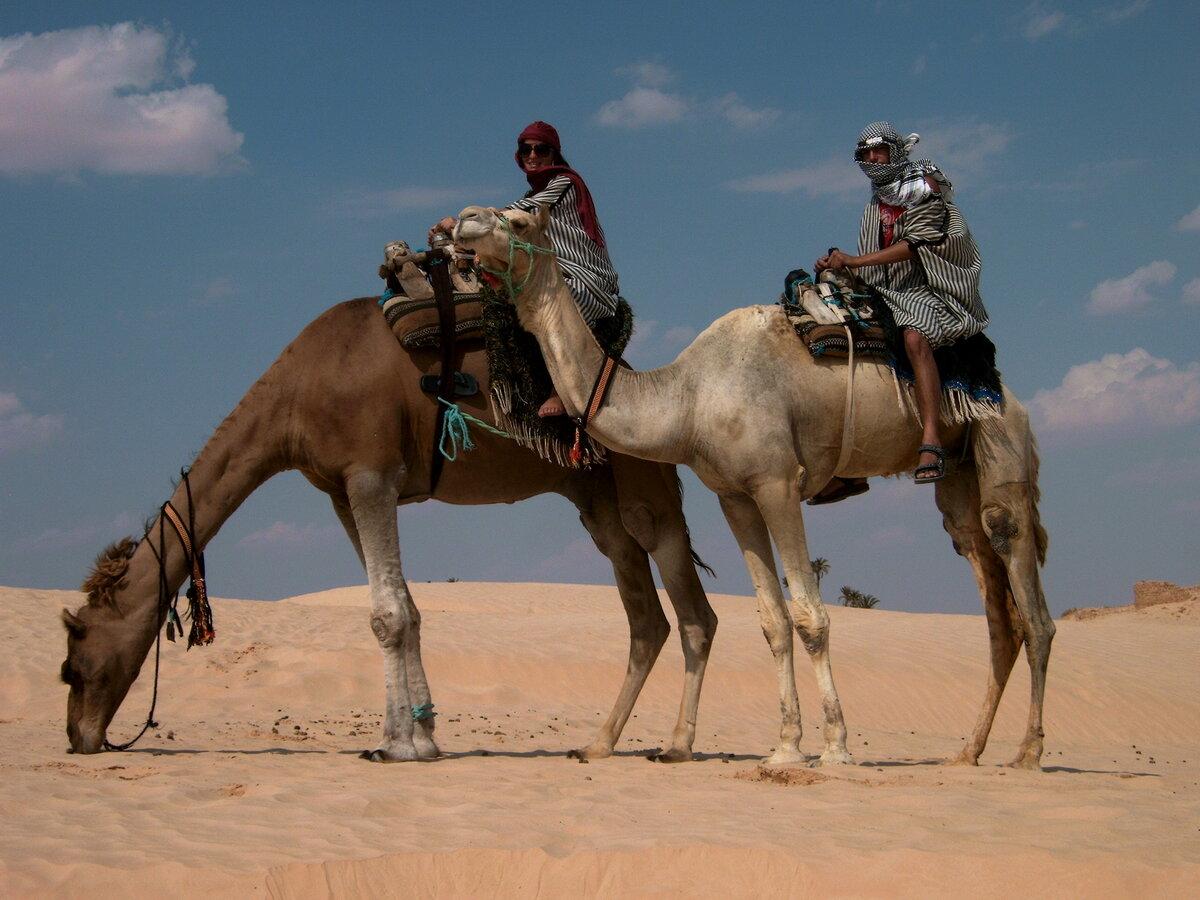 картинка верблюда и человека один самых востребованных