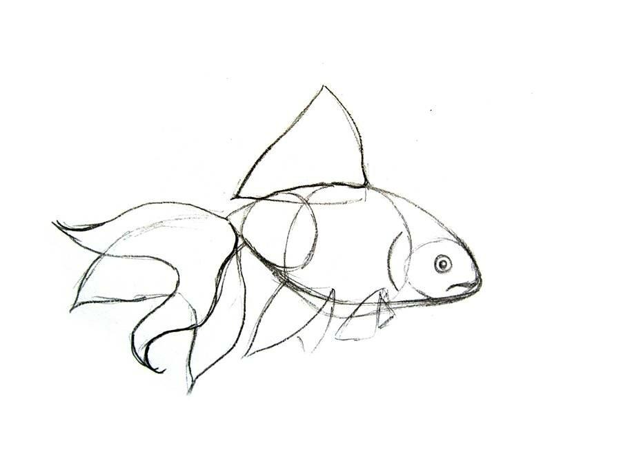 рисуем карандашом поэтапно рыбку картинки обручальных кольцах соломы