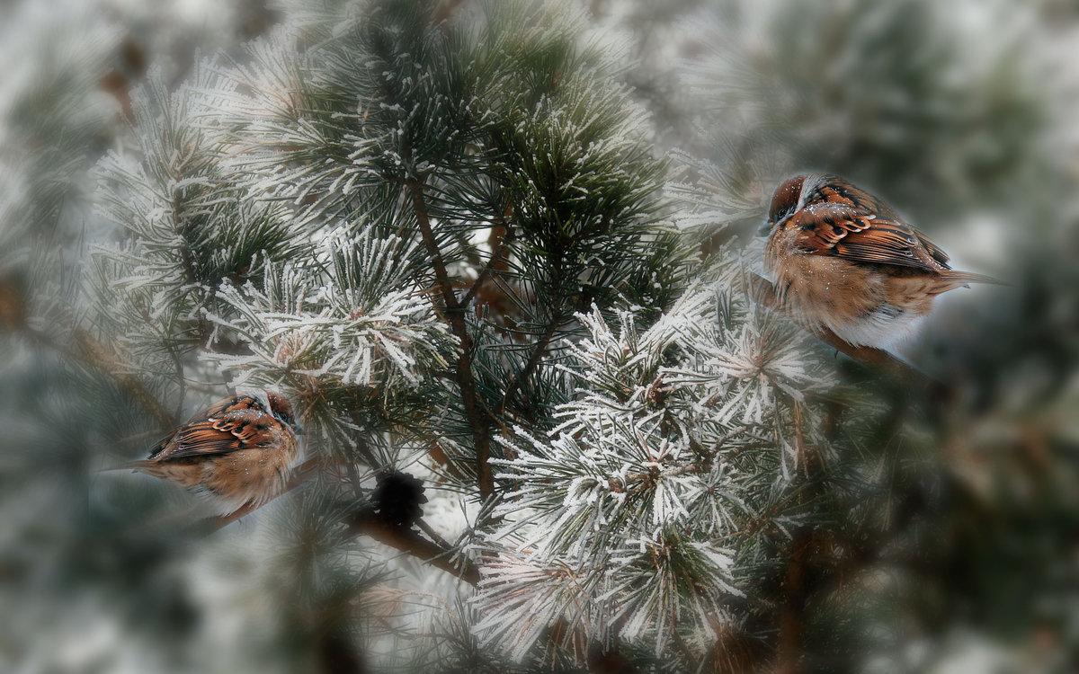 приверженцев птица заморозок картинки это плоские