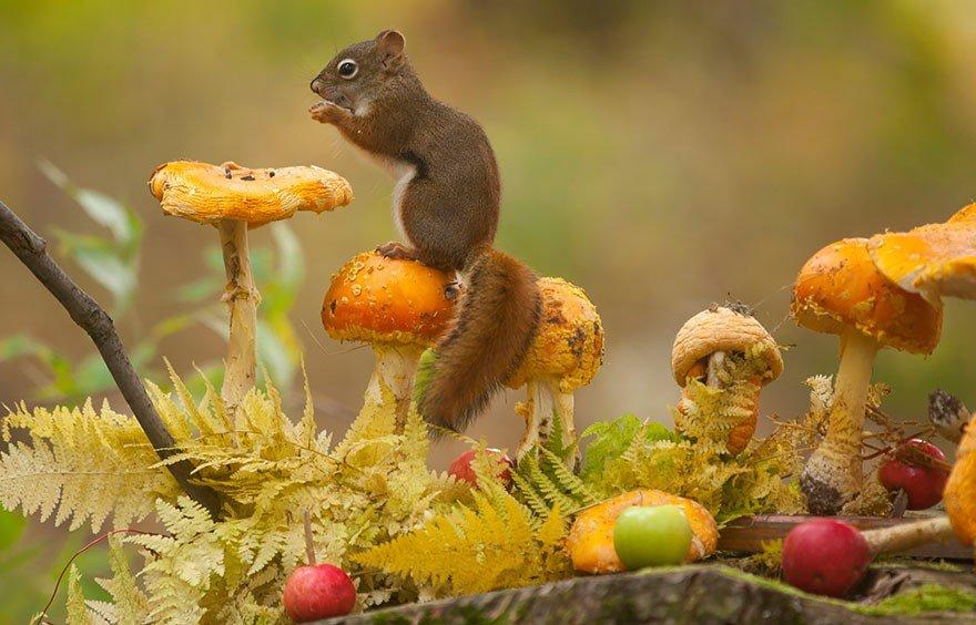 Прикольные животные осенью