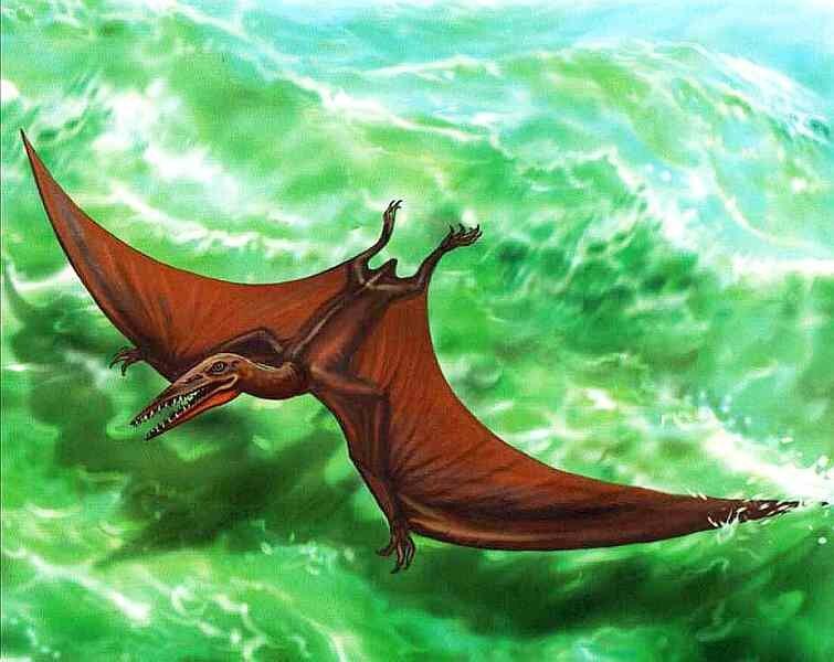 Картинки летающего динозавра