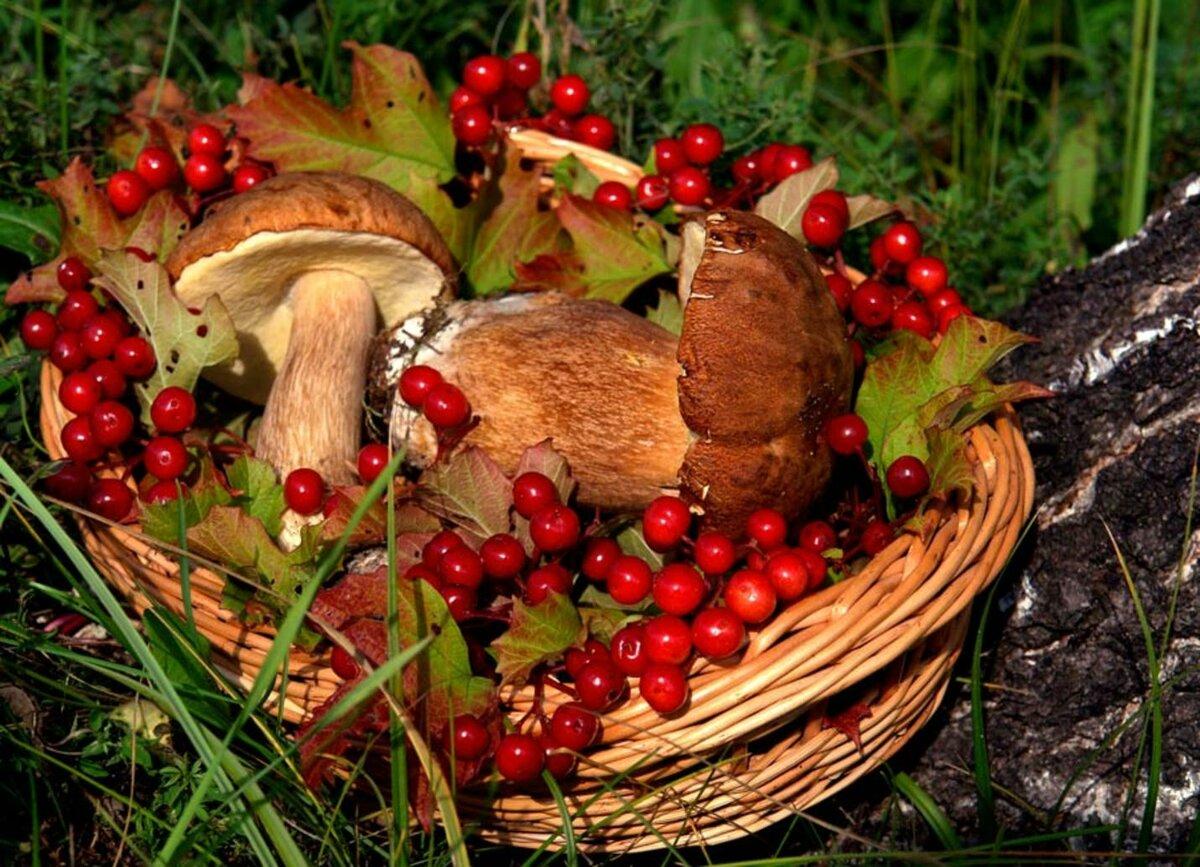 Картинки собирать грибы и ягоды, надписями смешные