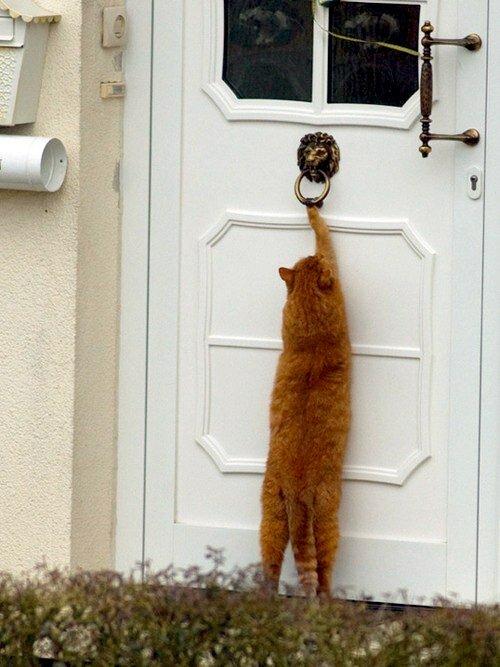 Смешные картинки на дверь, день пво