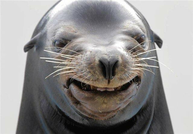 Смешной тюлень картинка, для чуда фильм