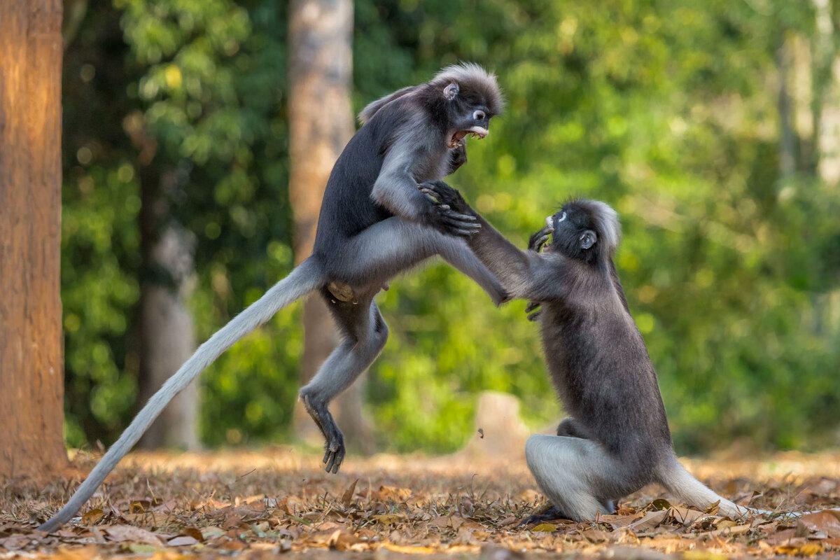 Прикольные смешные картинки по животных