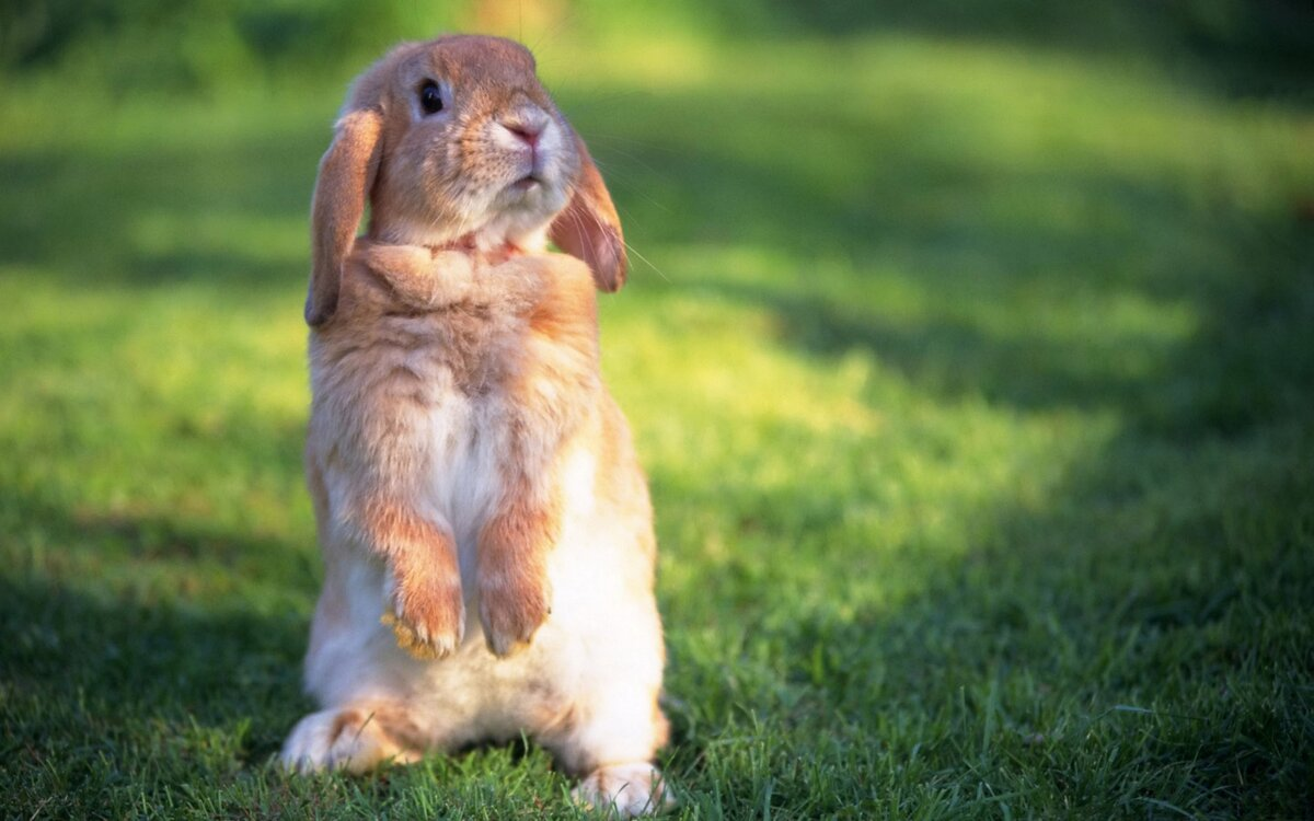 Кролики в смешные картинки