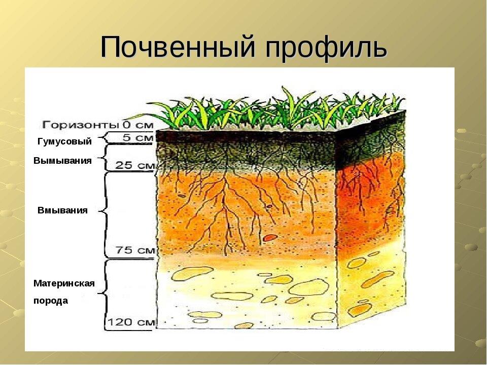 Разрез почвы картинки