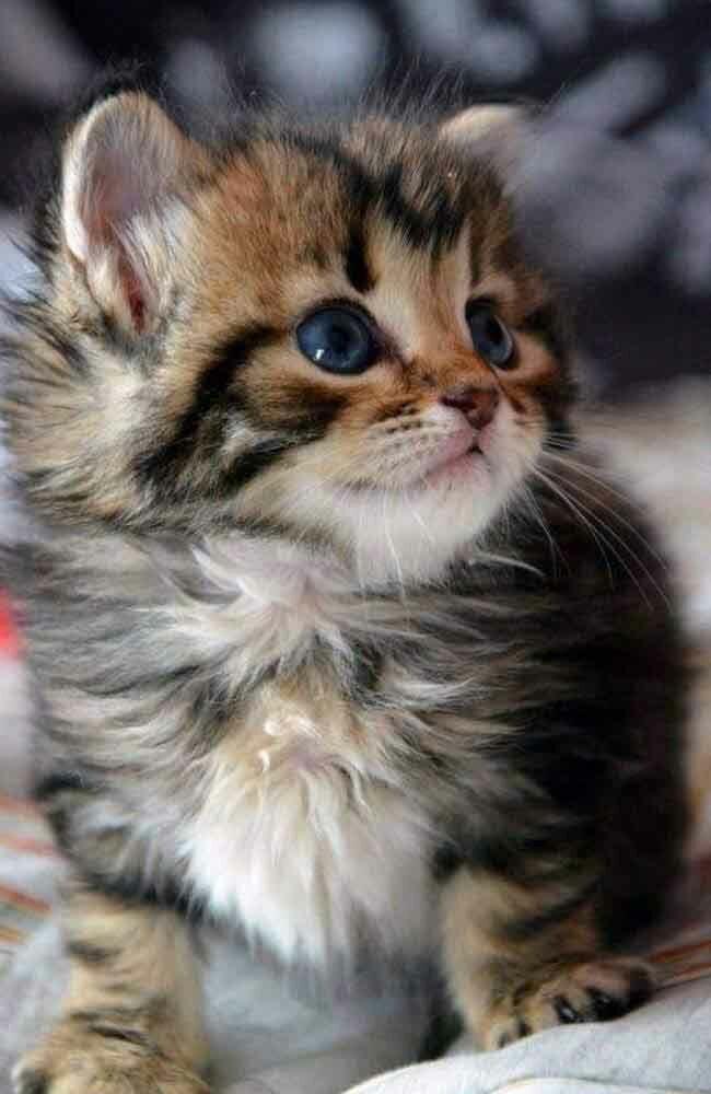 Прикольные картинки маленьких котят