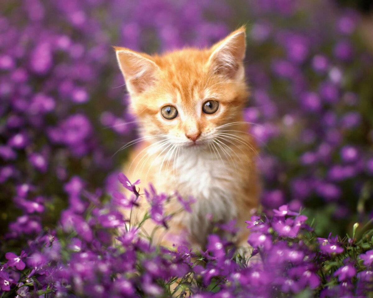 Картинки котят в цветочках