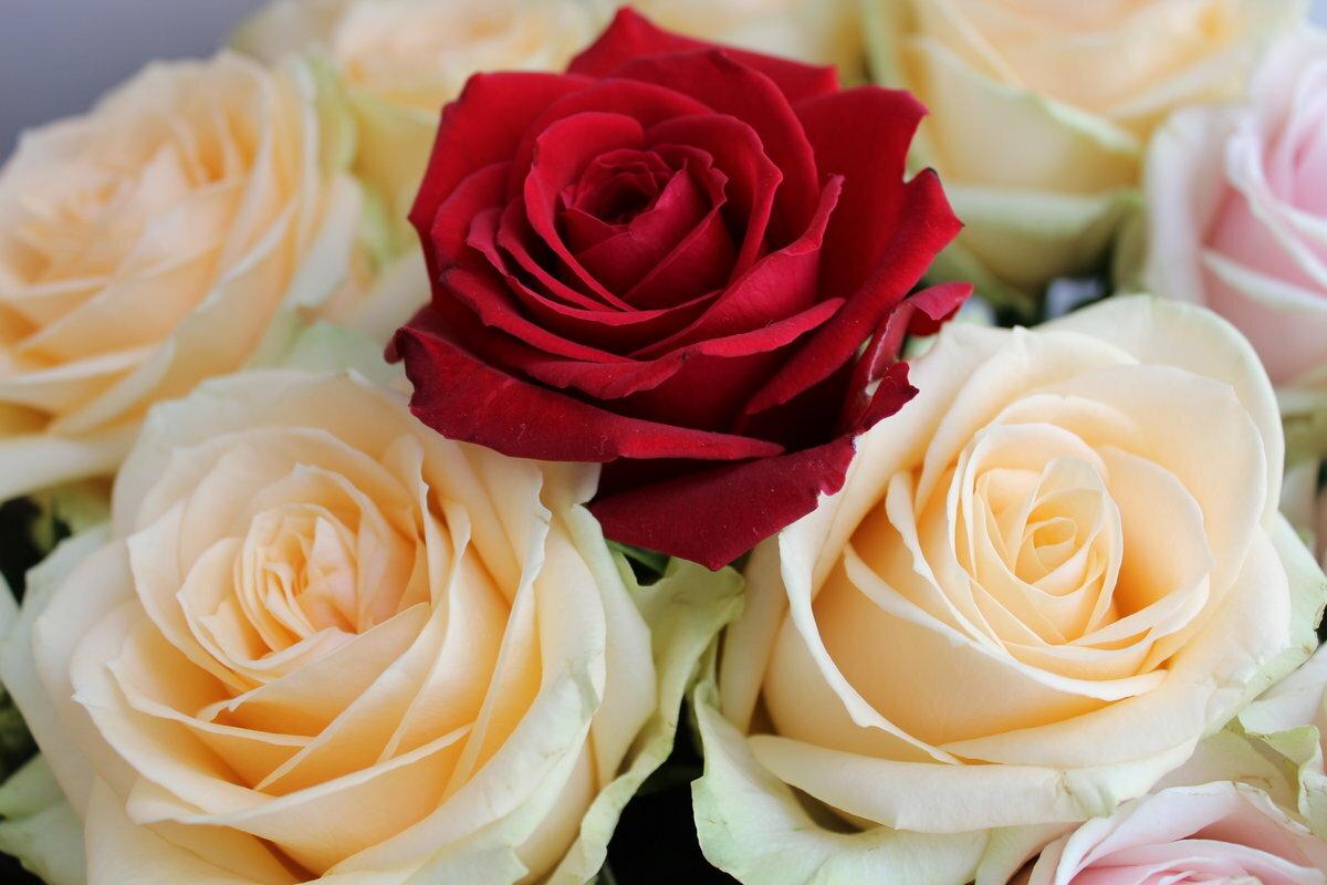 картинки роз по почте непременно сразу, чтобы