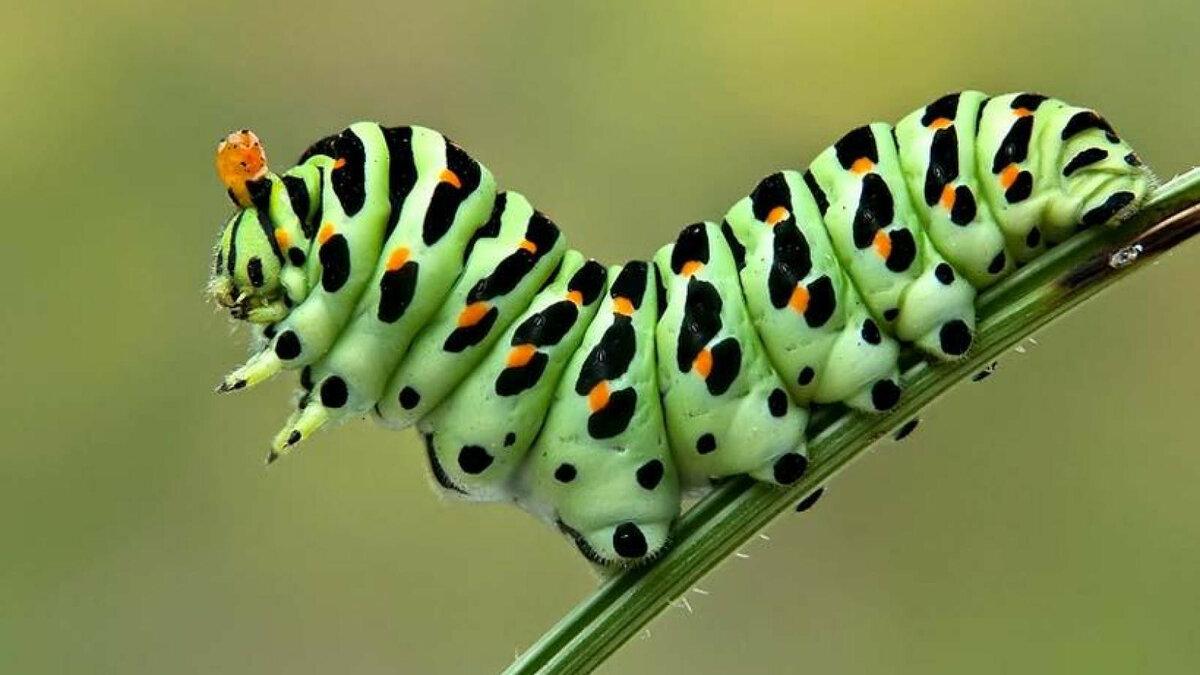 Гусеницы картинки красивые, надписью улыбнитесь