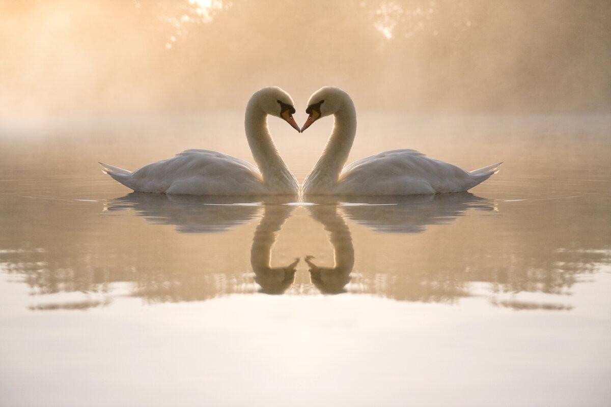 Открытка признание в любви со смыслом, открытки