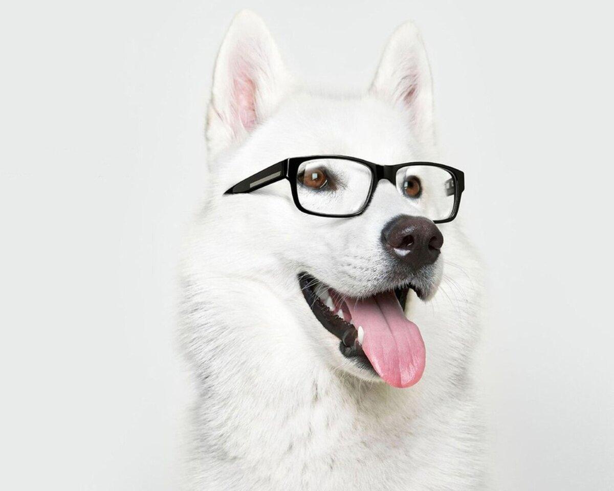 Надписью, рисунки крутые собаки