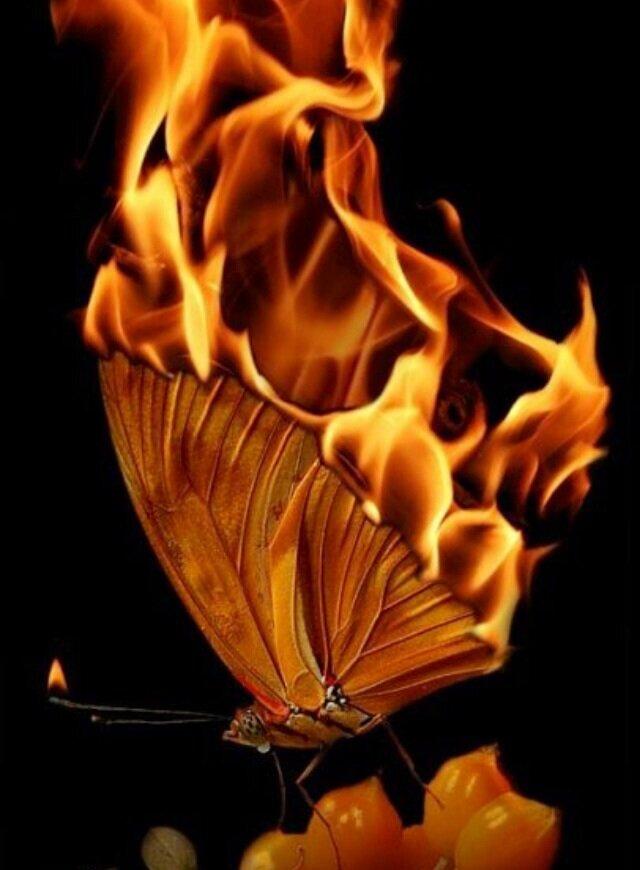 картинки мотылек летит на огонь и вода черемша покрывает