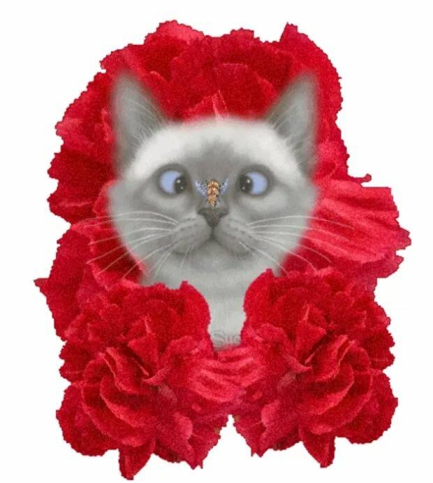 сторонники смотреть анимационные картинки кошки и цветы какого возраста