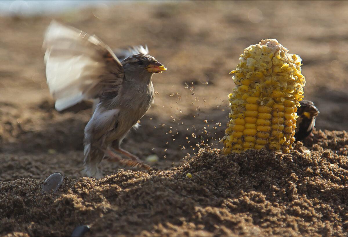 Вкусная кукурузка