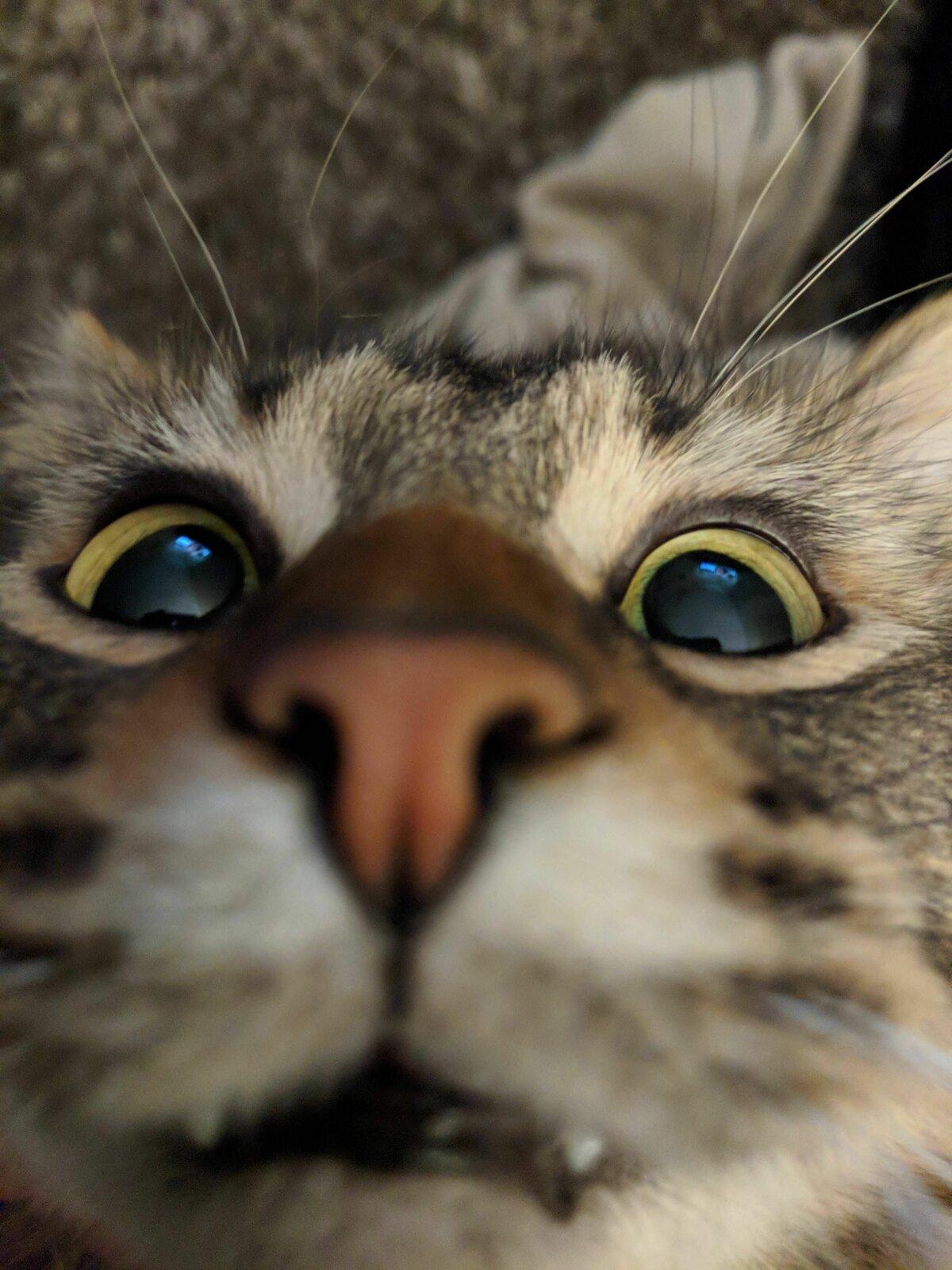 Прикольные мордочки котят картинки, открытка