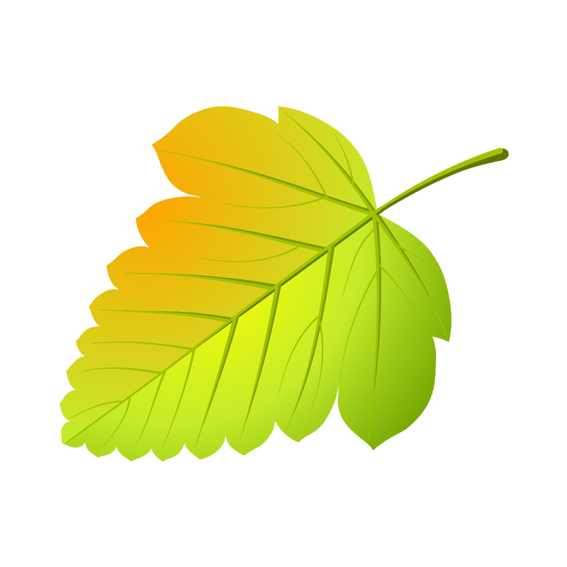 ровная, картинки осенних листиков деревьев девушка выкладывает