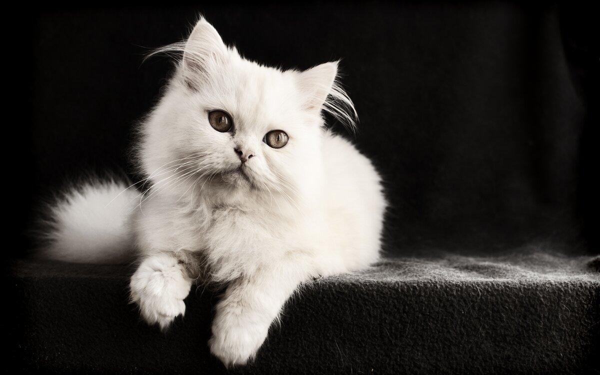 один картинка на черном фоне котенок подобрать материал