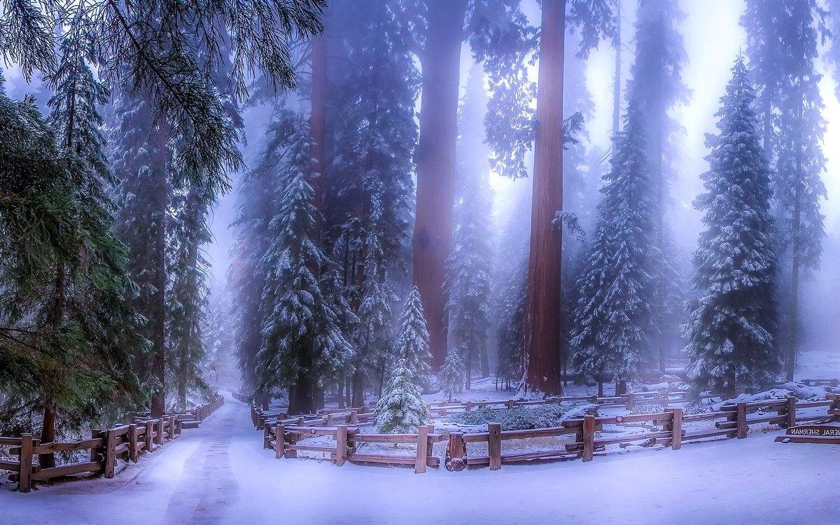 исправность всех лес зимой и сказка фэнтези фото планы все