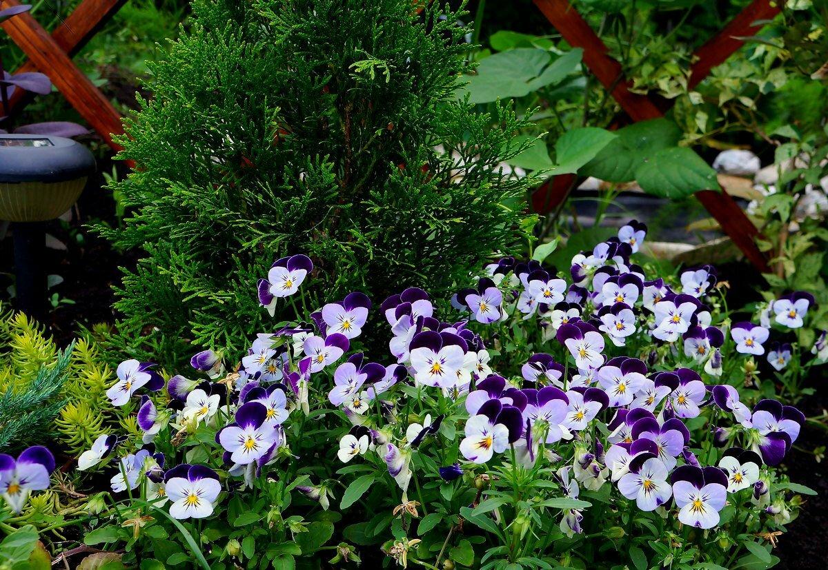 Красивые фото шторы ламбрекен из цветов бережное