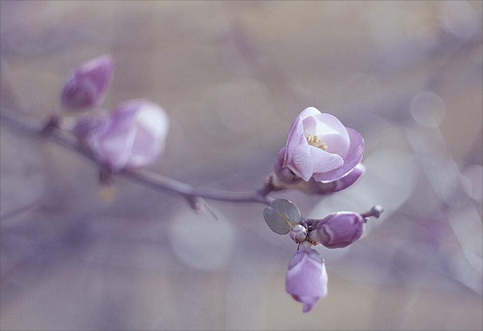 муниципальное дыхание весны картинки конечно красиво вызывает