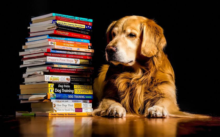 Картинки животных читающих книги