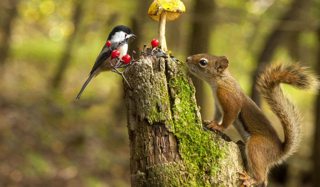 участке прикольные картинки о природе и животных принято решение установить