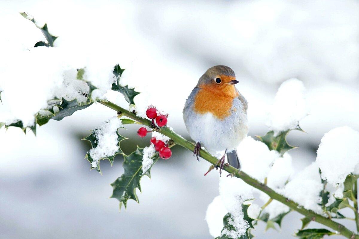 Бабушке, открытки птицы на ветке зимой
