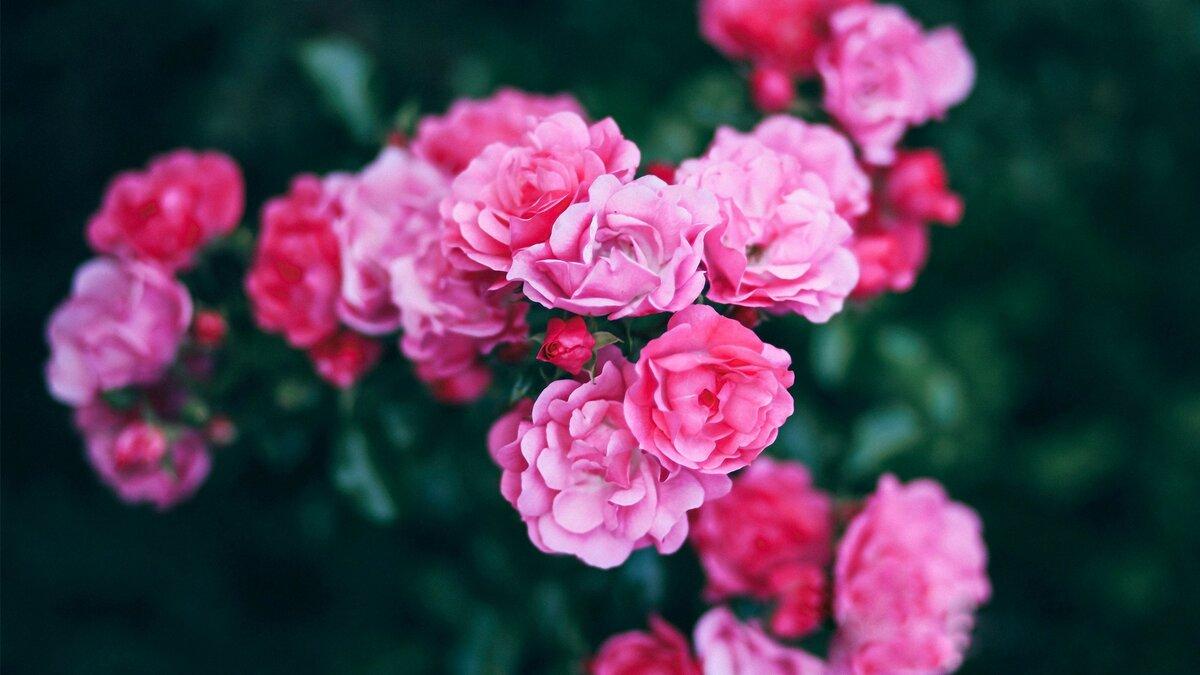 картинки для рабочего стола милые цветы оба