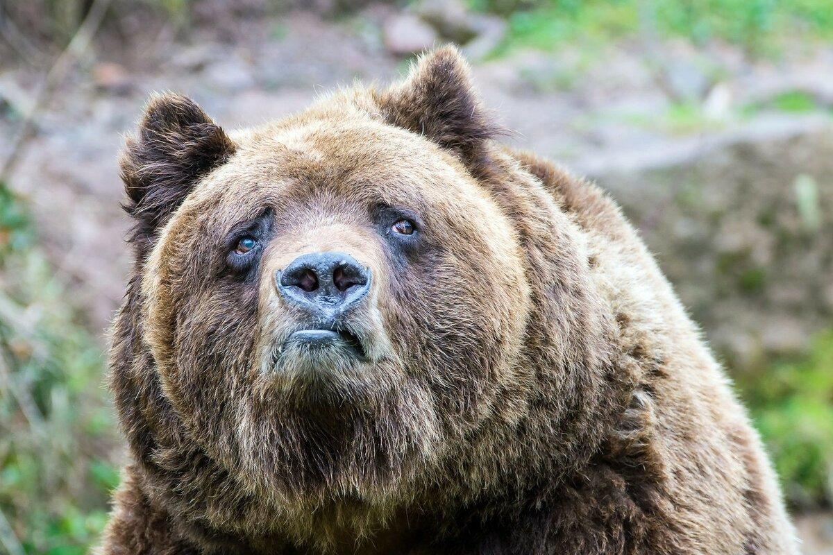 Скорбь, прикол с медведем картинка