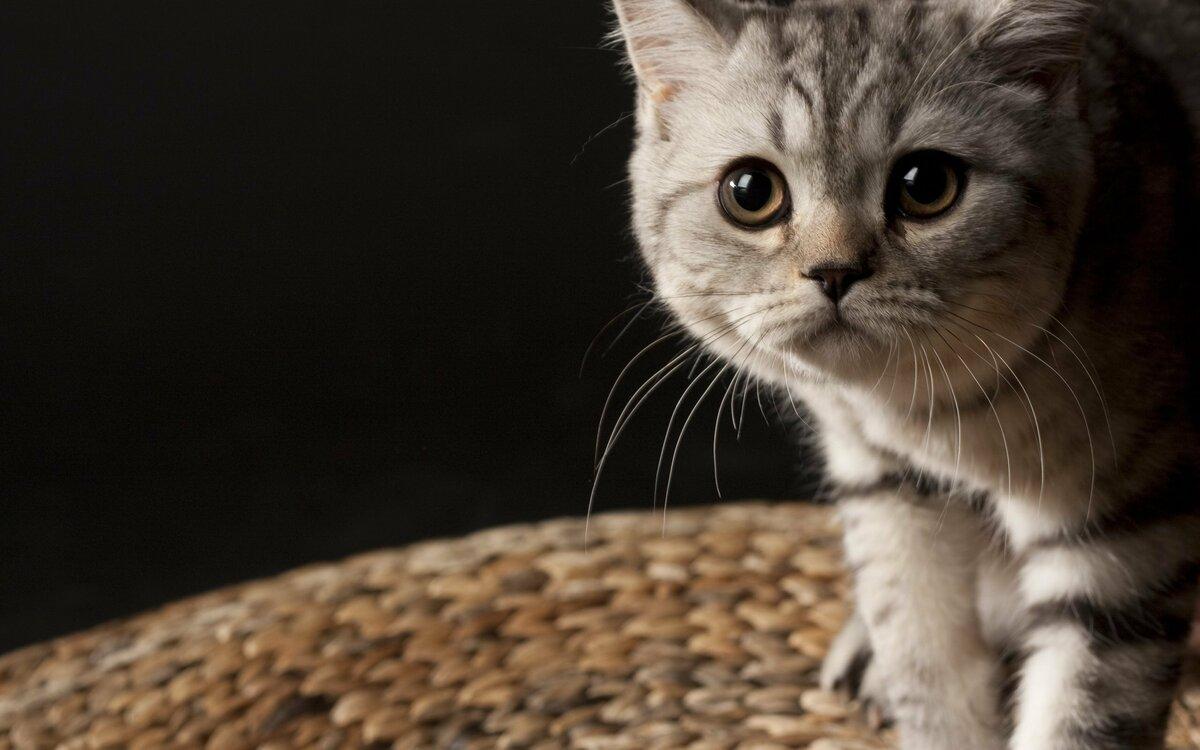 Картинки с кошками на телефон, пожеланиями утра дня