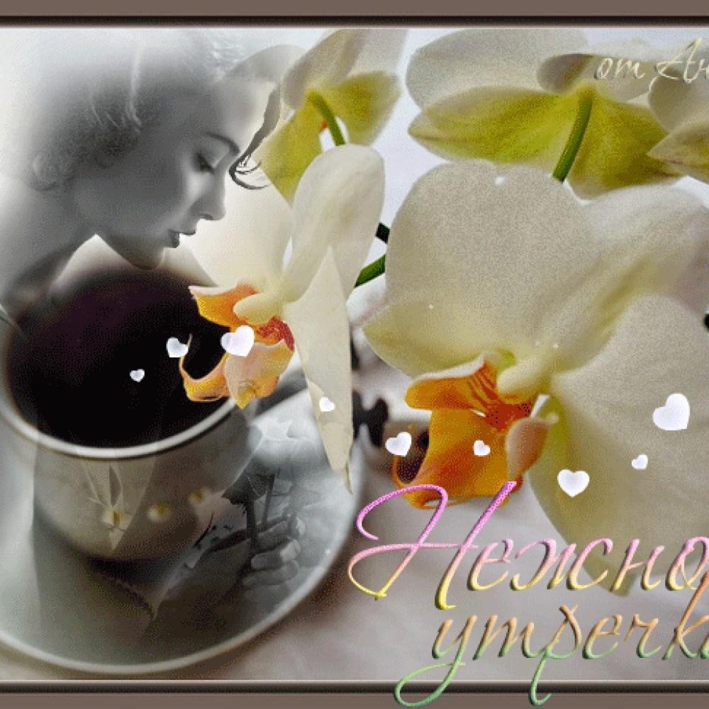 Картинки анимация доброго нежного утра, привет хорошего дня