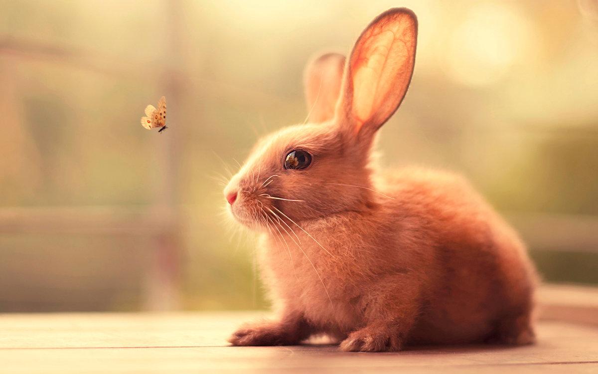 Милые и красивые животные картинки, приколом