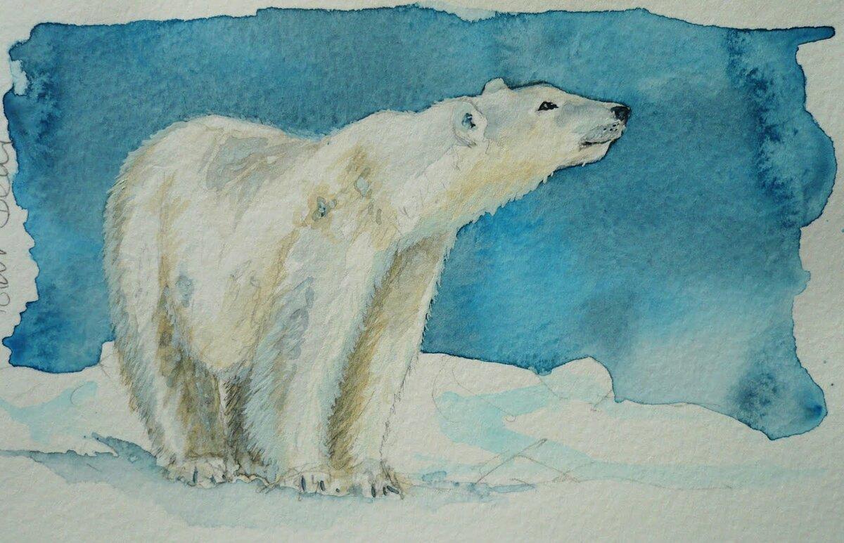 Белый медвежонок рисунок