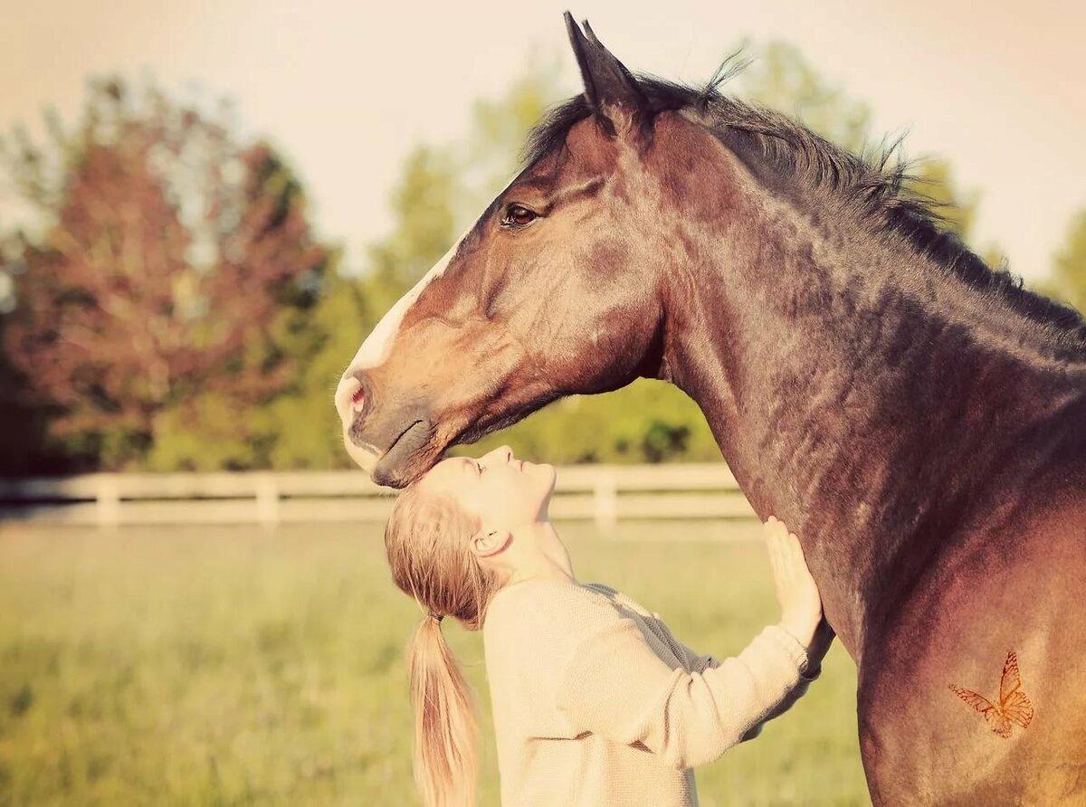 лошадь и человек фото картинки если понадобиться
