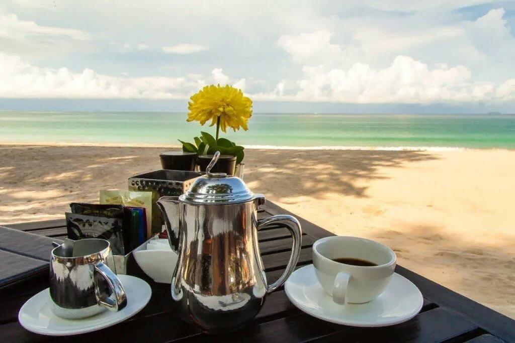 Бумаги тюльпаны, картинки с морем и пляжем доброе утро