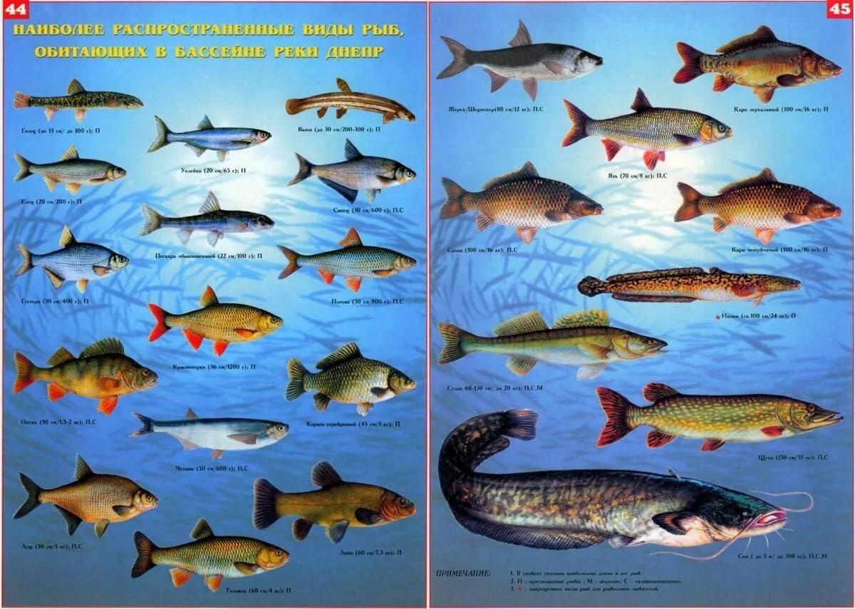 быть картинки рыб которые водятся в водоемах еао такой убитости