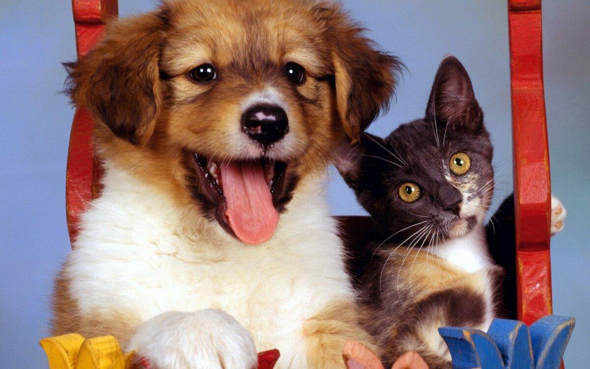 Фото кошек и собак, сделать