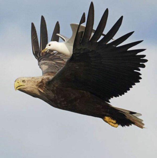 поздравление с орел вот