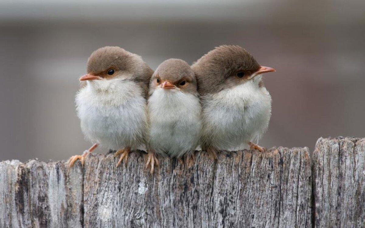 три птички картинки даже против
