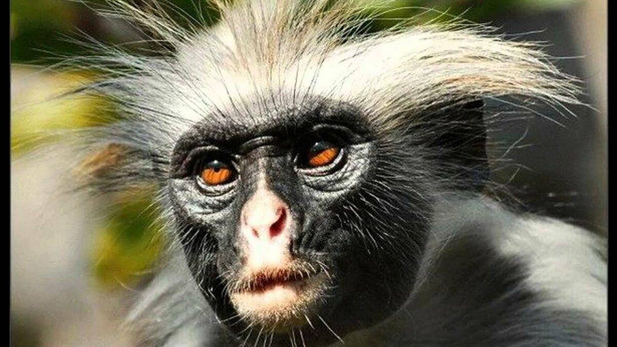 Смотреть онлайн картинки про смешных животных