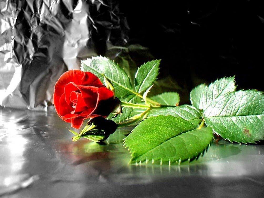 Открытки с цветами с надписями о жизни