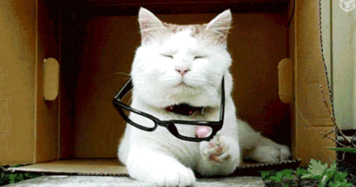 Гифки смешные про котов