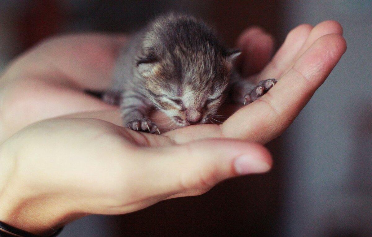 Картинками, маленькие котята картинки найди пожалуйста