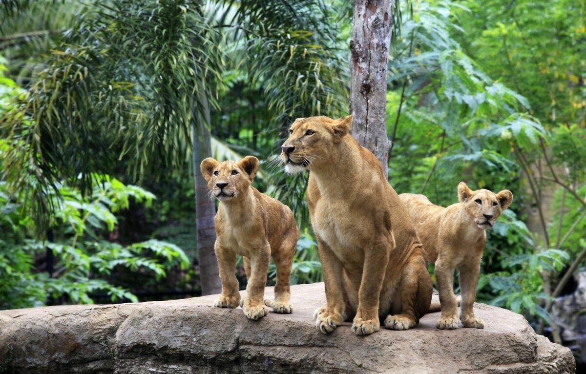 Картинки семейства животных