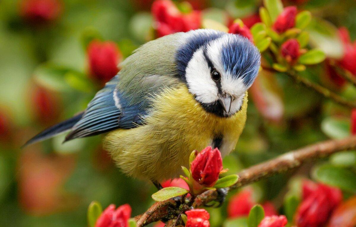 Картинки природы животных и птиц, красивые рисунки