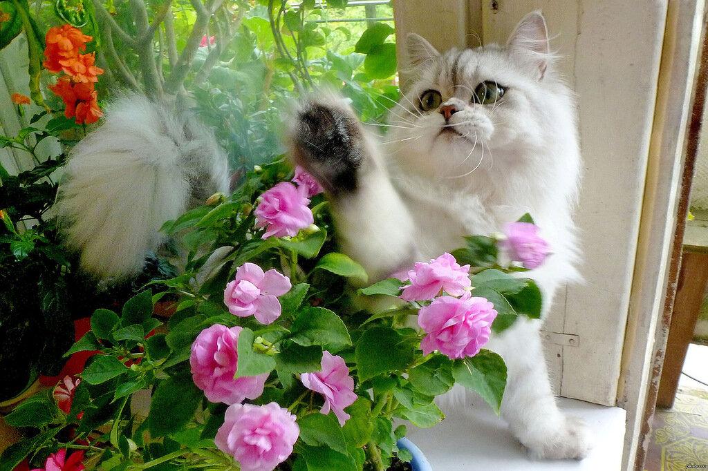Открытки котенок в цветах