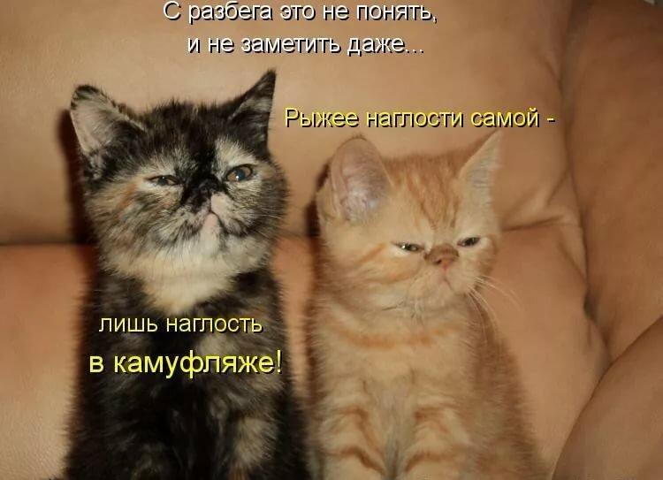 Картинки со смешными надписями про кошек